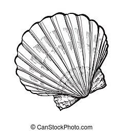 vector, mar, aislado, estilo, agua salada, venera, ilustración, bosquejo, cáscara