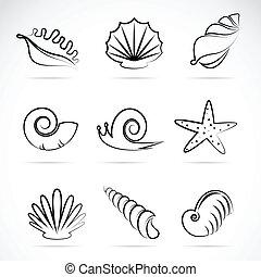 vector, mar, colección, caracol, conchas