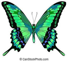 vector, plano de fondo, mariposa, hermoso, aislado, blanco, verde azul, ilustración