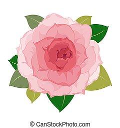 vector, primer plano, flor, peonía