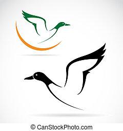 vector, salvaje, imagen, vuelo, pato