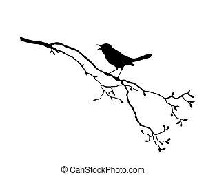 Vector silueta del pájaro en rama