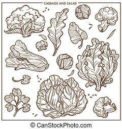 vector, vegetales, iconos, lechuga, coles, bosquejo, ensalada