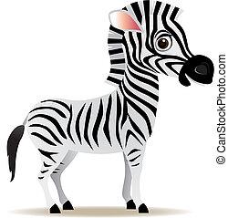 vector, zebra, caricatura