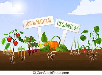 vegetal, cartel, jardín