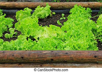 vegetal, home-grown