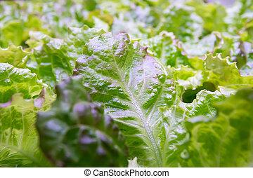 vegetal, hydroponic, tecnología, luz, orgánico, crecer, fue adelante, granja, interior