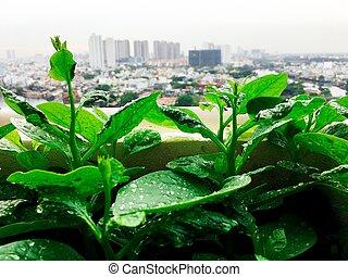 Vegetales mini granja de jardín en la azotea de la ciudad urbana