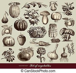 vegetales, vector, conjunto