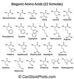 veinte, ácidos, biogenic, dos, amino