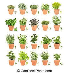 veinte, hierbas, hoja, sprigs, ollas