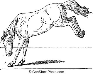 vendimia, caballo, patada, engraving.