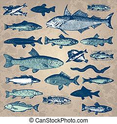 vendimia, pez, conjunto, (vector)