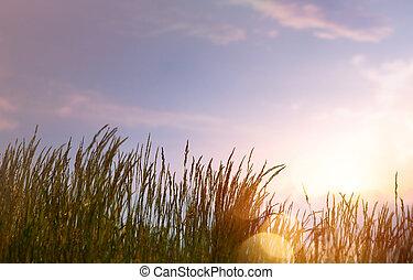 verano, arte, ocaso, plano de fondo, contra, cielo, resumen, fresco, pasto o césped