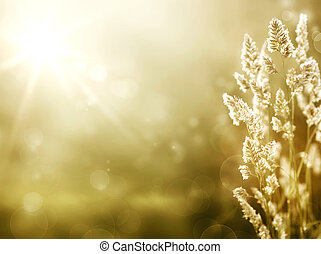 verano, arte, pradera, salida del sol, fondo.