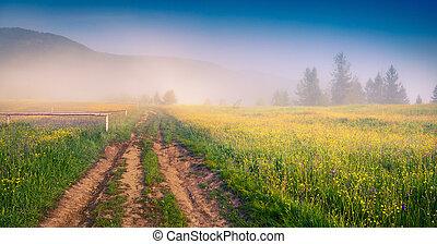 verano, carpathians, soleado, mañana