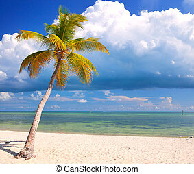 Verano en un paraíso tropical en Florida Keys, USA con palmeras, cielo azul, nubes y agua cristalina del Océano Atlántico