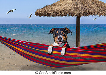 verano, hamaca, perro