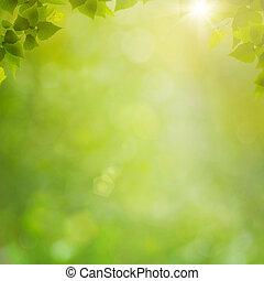 verano, natural, resumen, fondos, bokeh, bosque, follaje, fresco