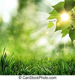 verano, natural, resumen, fondos, mañana, temprano, bosque