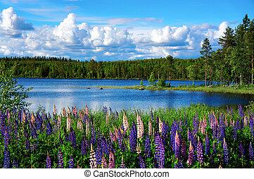 verano, paisaje, escandinavo