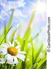 verano, pasto o césped, natural, plano de fondo, flores, margaritas