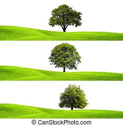 Verde ambiente y árbol