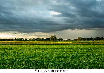 verde, encima, nubes oscuras, lluvioso, campo