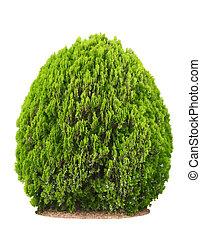 Verde hermoso arbusto