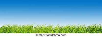 Verde hierba fresca sobre el panorama del cielo azul.