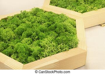verde ligero, musgo, estabilizado