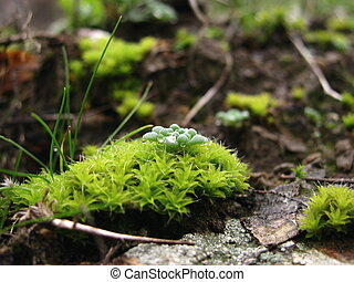 verde, musgo