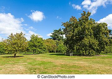 Verde verde y tranquilo jardín de madera bajo el sol