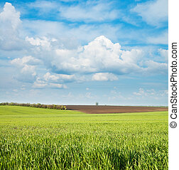 Verde y negro campo bajo el cielo nublado