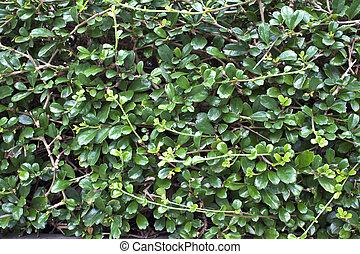 Verdes arbustos de fondo