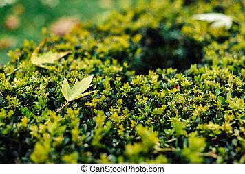 Verdes arbustos frescos