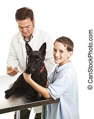 Vet trata a los chicos perro
