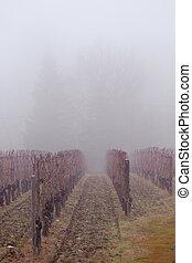Viñedo en la niebla