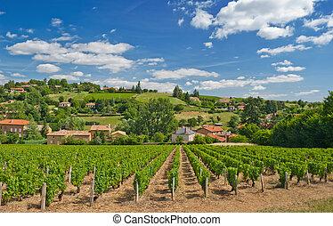 Viñedo en la región de Beaujolais, Francia