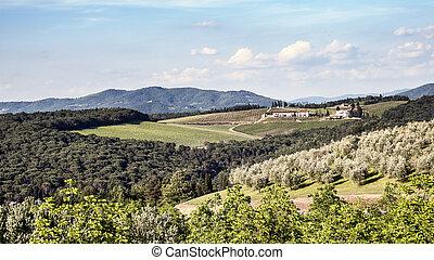 Viñedos y olivos en Toscana