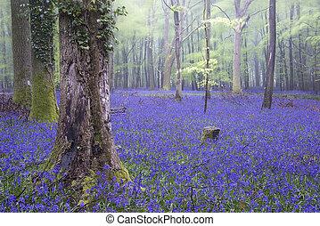 Vibrant Bluebell alfombras de primavera paisajes de niebla