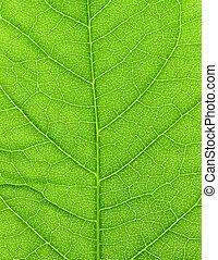Vibrant verde hoja macro cierren fondo natural.