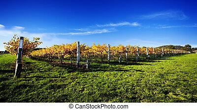 Vibrant viña