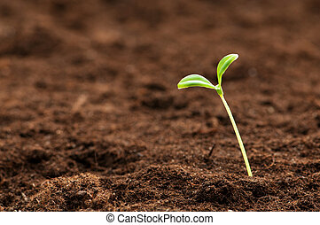 vida, concepto, ilustrar, planta de semillero, verde, nuevo