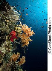 vida, marina, sea., rojo