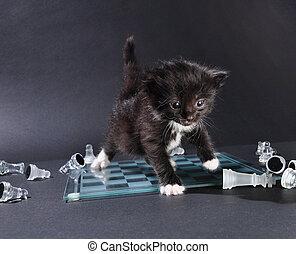 vidrio, gatito, tabla, artículos del ajedrez