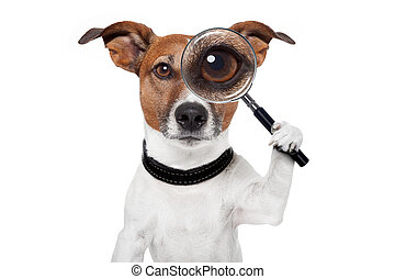 vidrio, perro, aumentar, buscando