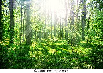 Vieja selva