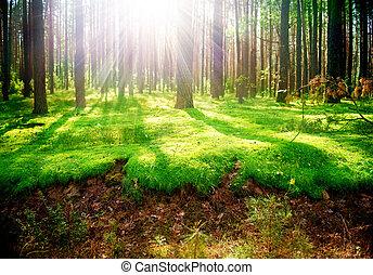 Viejo bosque