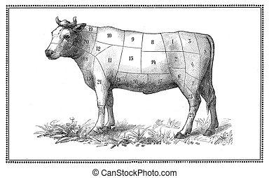 viejo, carne de vaca, gráfico